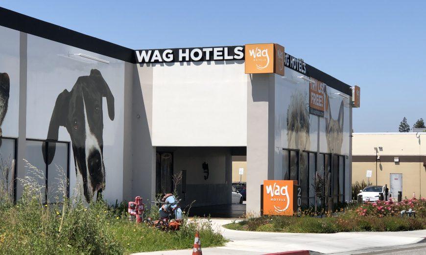 Wag Hotel Dog Attacks euthanized pit bull