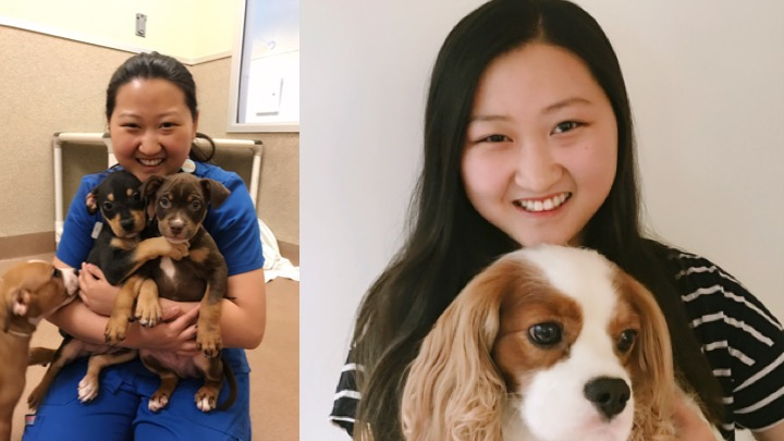 Julia Hyun has been volunteering at Humane Society Silicon Valley, and it inspired her to becoming a veterinarian at HSSV.