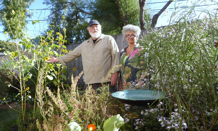 Janay and Kurt Harvey are known to be friends of the butterfly community. They help butterflies at the Ulistac Natural Area and at their home.